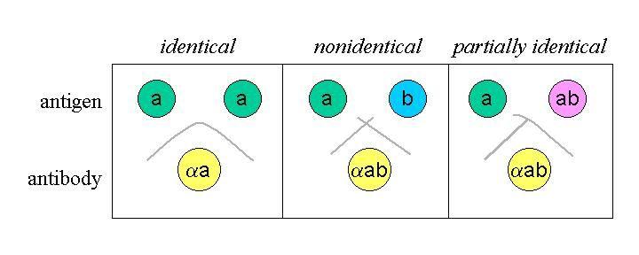 методы выявления паразитов в организме